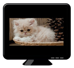 Cat on screen with wider black bars