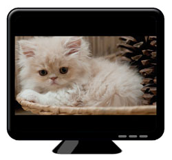 Wide screen view of cat on screen