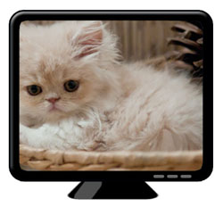 Screen with cat - fullscreen
